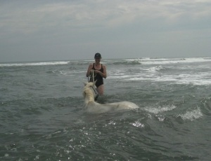Our horses love the water!
