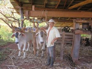 Eduardo and his oxen in his trapiche